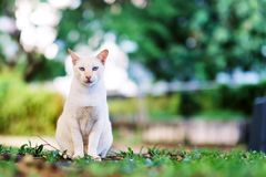 Cat sit on the grass in the garden stock images