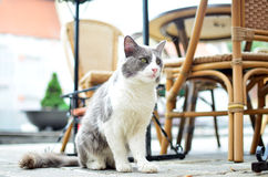 Cat sit on ground in urban terrace Stock Images