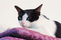 Cat sit on hassock Stock Photo
