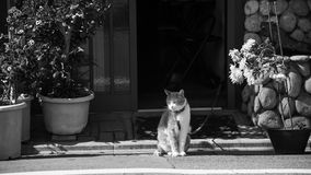 cat sit and relax. Black and white Royalty Free Stock Images