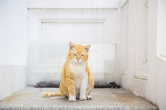 Cat sit and relaxing on the marble Stock Photography