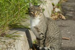 Cat sit on road Stock Photo