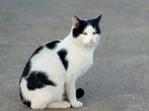 Cat sit on road Stock Photos