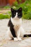 Cat Sit On Road Summer sveglia Immagini Stock Libere da Diritti
