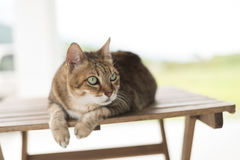 Cat sit on the table Stock Photos