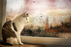 Cat sit on windowsill watch rainy street though the window covered with rain drops
