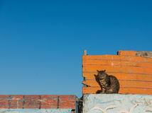 A cat sit on the wooden boat Stock Images