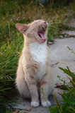 Cat sit and yawning Stock Images