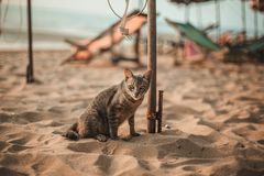 Cat siting on the beach. Under the umbrella Stock Photography