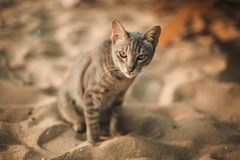 Cat siting on the beach. Under the umbrella Stock Images