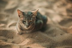 Cat siting on the beach. Under the umbrella Royalty Free Stock Image