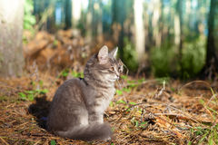 Cat siting in the forest Stock Photo