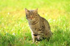Cat siting in green grass Stock Images