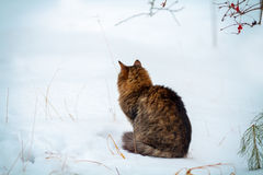 Cat siting outdoors in snowy winter Stock Image