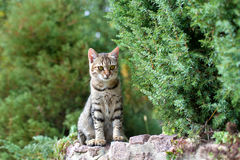 Cat siting on stone Royalty Free Stock Photo