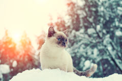 Cat siting in winter forest Stock Image