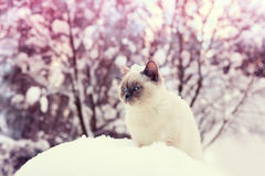 Cat siting in winter forest Stock Images