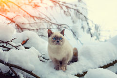 Cat siting in winter forest Stock Photo