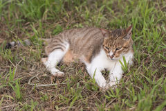 Cat sitn on grass Royalty Free Stock Image