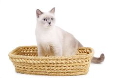 Cat sits in basket Stock Photography