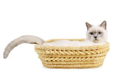 Cat sits in basket Royalty Free Stock Image
