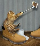 Cat in boot take selfie. The cat sits on a big yellow men`s shoe and takes a selfie stock images