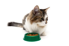 Cat sits beside a bowl of food on a white background Royalty Free Stock Image