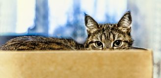The cat sits in a box. close up Stock Image