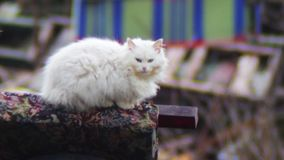 Cat that sits on car tires (near stock footage