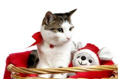 Cat in a Christmas Basket stock photography