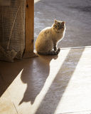The cat sits in the doorway lit by sunlight.  Royalty Free Stock Photos