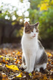 Cat sits on fallen leaves in autumn Stock Images
