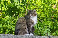 Cat. Sits on the fence and basks in the sun Stock Photo