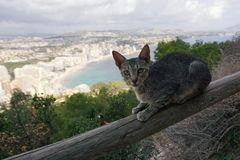 The cat sits on the fence on the mountain Ifach in Spain.  stock image