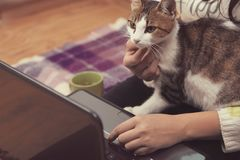 Cat sits on the girl`s lap. The cat sits on the girl`s lap and watches the movie on the laptop Royalty Free Stock Photography