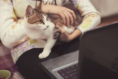 Cat sits on the girl`s lap. The cat sits on the girl`s lap and watches the movie on the laptop Royalty Free Stock Photo