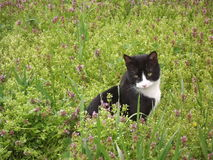 Cat. A cat sits in the grass Stock Images