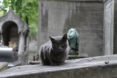 The cat sits on a grave. Royalty Free Stock Photography