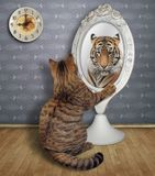 Cat sits and looks in the mirror 3 stock image