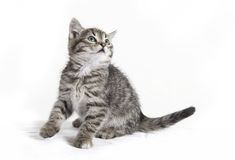 Cat sits and looks Royalty Free Stock Photo