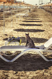 Cat sits on a lounger on Larnaca beach in summer in Cyprus Royalty Free Stock Photo