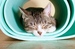 The cat sits on the mat for yoga. Kitten tired asleep after sports stock photo