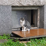 Cat sits near the basement. Small striped kitten sits near the basement Stock Photo