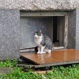 Cat sits near the basement Stock Photo