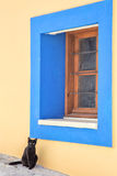 The cat sits near the blue box Royalty Free Stock Photos