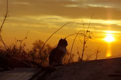 The cat sits on the roof of the house and looks at the sunset stock photography