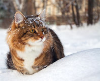Cat on sits on snow Royalty Free Stock Images
