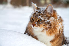 Cat on sits on snow Royalty Free Stock Photos