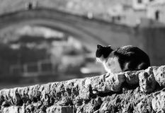 A cat sits on a stone wall near the famed bridge of Mostar, Bosnia Stock Image