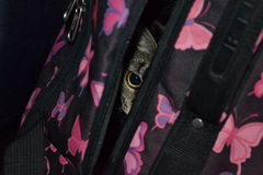 Cat sits in the suitcase Stock Images